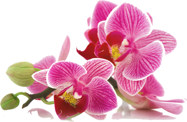 orchids40